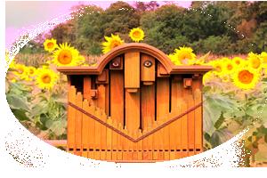 orgue et soleil